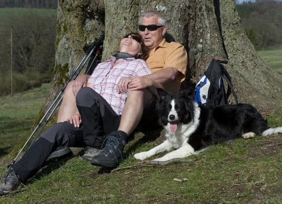 The Best Companion Pets for Seniors