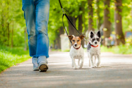 Dogs and puppies walking