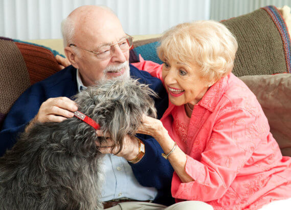 seniors-here-are-the-four-benefits-you-get-from-caring-for-a-pet